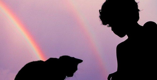 猫が死後に向かう『虹の橋』とは?由来や所説を紹介!