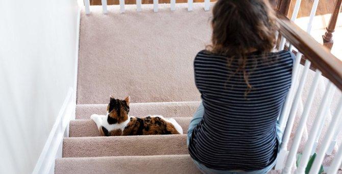 猫トラップ!?飼い主に訪れる様々な試練