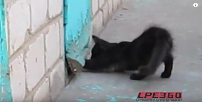 誰が見てもこれは脱走の手助け!ワンコを脱走させようとする猫さん