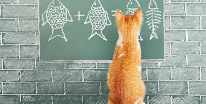 猫はブリを食べても大丈夫?健康への影響や食べてしまったときの対処など