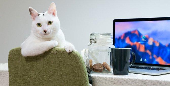 猫が飼い主を『見下しているとき』にする行動3選