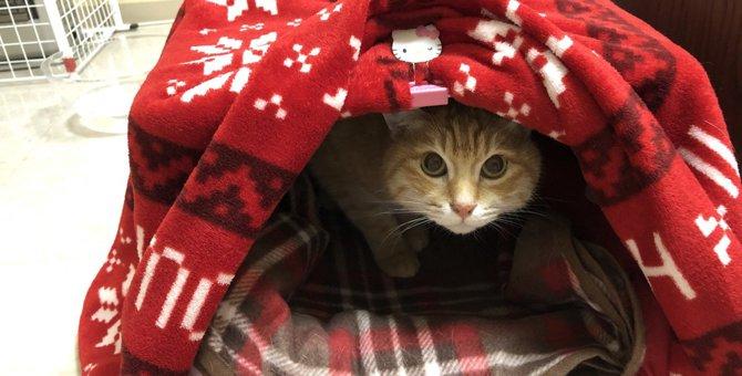簡単でかつシンプル!ダンボール箱で猫コタツを使ってみました!