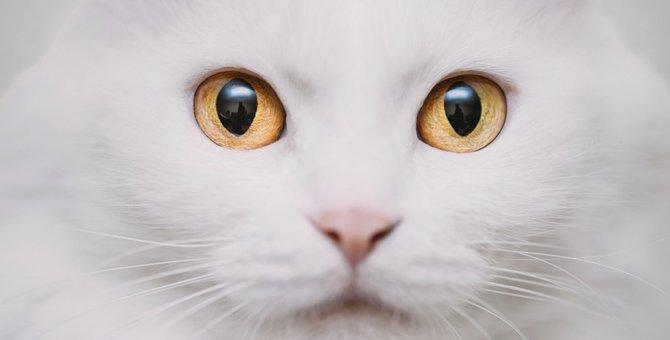白猫の性格、知ってますか?あの白い仮面の下には「犬」が隠れていた!?