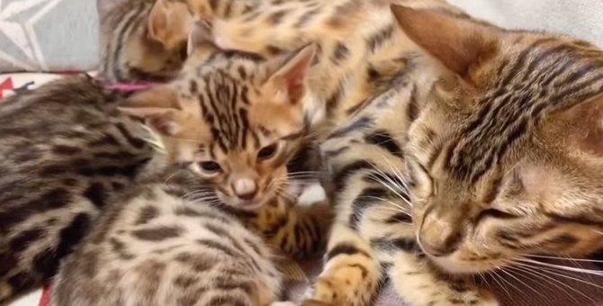 産まれたて~1歳までの猫ちゃん成長記録♡