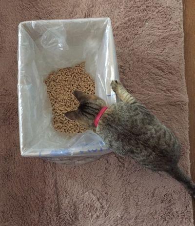 災害時にも大丈夫!ダンボール箱で作る簡易型の猫のトイレを作ってみました。