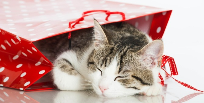 猫のポーチおすすめ5点!おしゃれ、かわいい商品