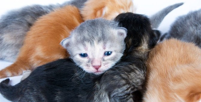 猫の寿命は『毛色・毛の長さ』で違う?猫種や環境にも因果関係があった!