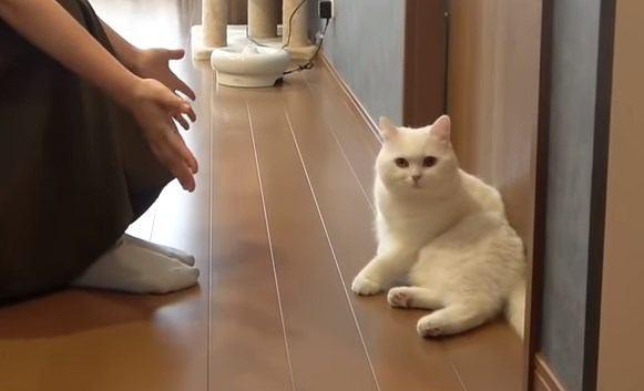 兄vs妹!!猫ちゃんを呼んだらどっちに来る??