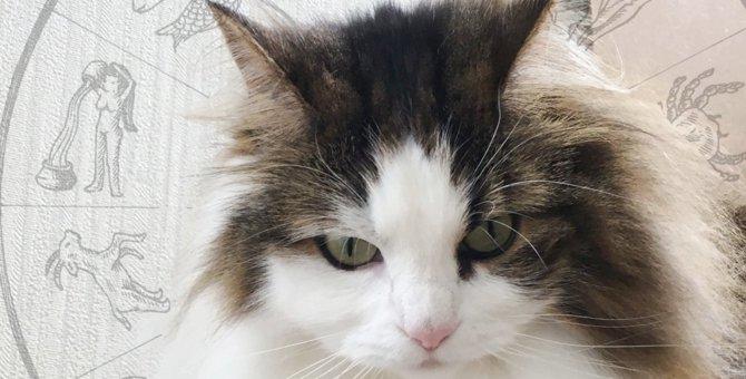 Laylaの12猫占い 8/19~8/25までのあなたと猫ちゃんの運勢
