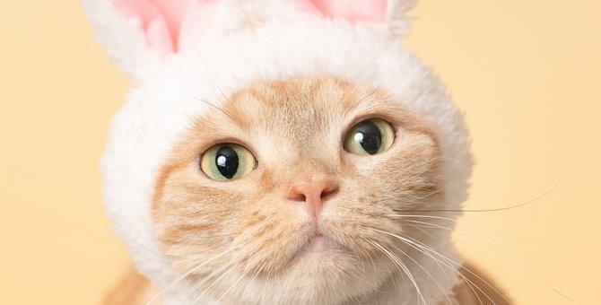 猫に包まれ、しゃーわせ(幸せ)♡猫カメラマンのグッズが楽しめる『ねこがかわいいだけ展』が夏に開催!