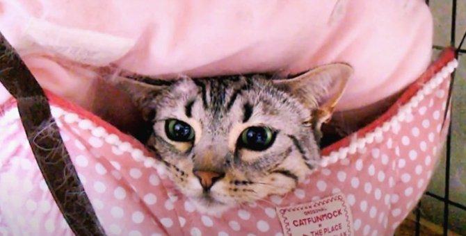 ひょっこり!ハンモックに潜り込んで幸せな猫ちゃん♪