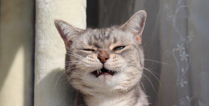 猫が口を『カチカチ』鳴らす理由5つ