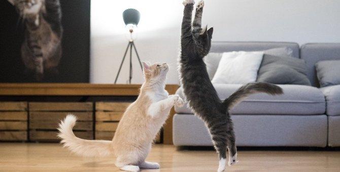 猫が『急に暴れ出した』ときの原因4つと対処法