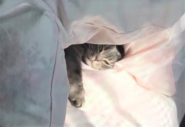 猫ちゃんの模様、生え変わる毎に薄くなる??
