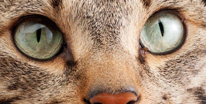 猫の『まばたき』に隠された3つの意味