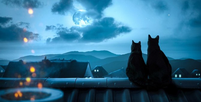 どこまで真実!?猫をめぐる奇想天外な『猫伝説』3つ