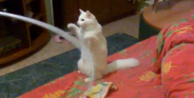 猫ちゃん思わずパンチ!フラフープに勝負を挑むが最後は…