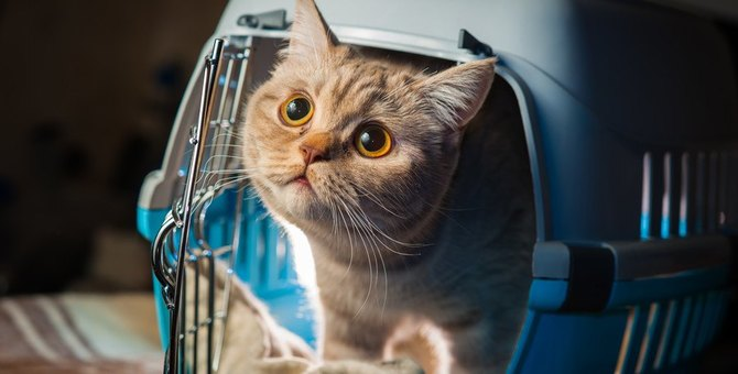 あなたは大丈夫?猫を寂しい気持ちにさせる飼い主の5つの行動
