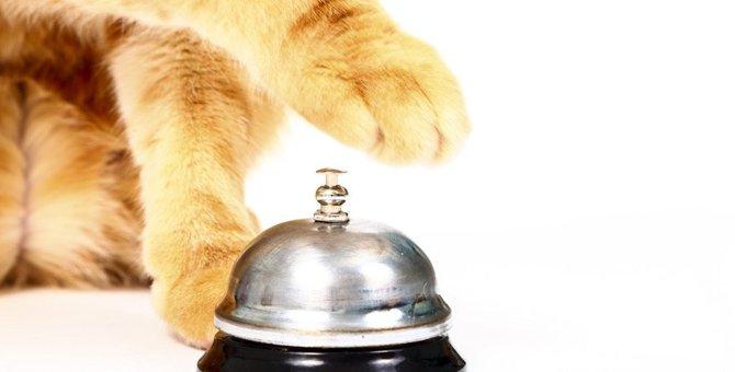 猫に『呼び鈴鳴らし』をしてもらうには?楽しく教える6ステップ