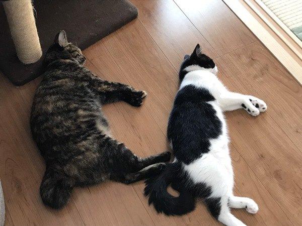 今年の夏は猫が快適な空間を作ろう!3つのポイント