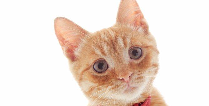 子猫に首輪はどうつける?そもそも付けた方が良い?疑問を解消します!