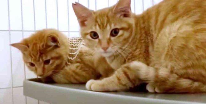 高架下で暮らす子猫たちを保護…新たな未来へ一歩を進む!