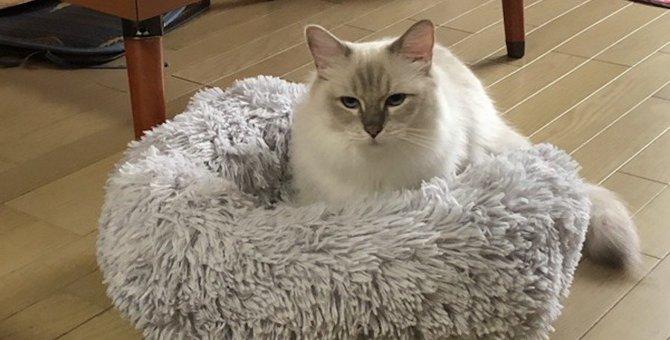 猫にとって『居心地のいいベッド』の条件4つ