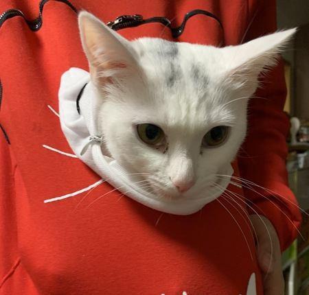 猫が好きな飼い主の服の素材3つ