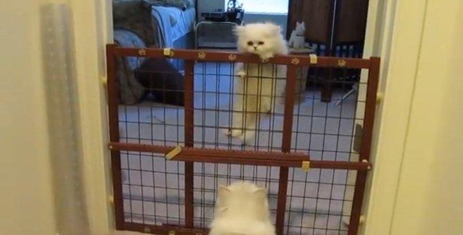 「うちの子天才だにゃ~♡」子猫の成長が嬉しすぎる母猫ちゃん