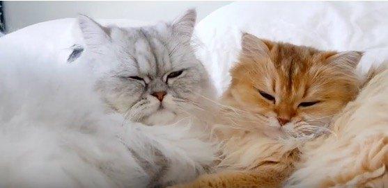 とにかくモフモフでラブラブな2匹の猫ちゃん