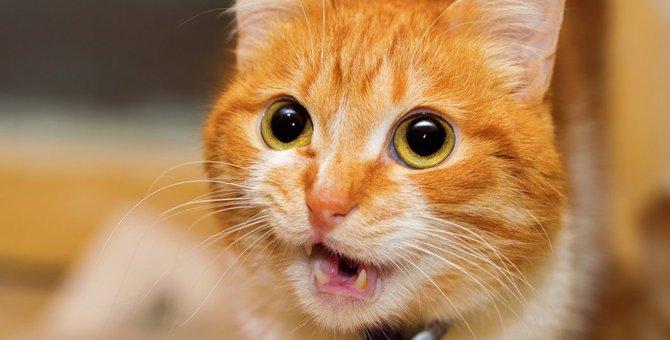 猫は自分の名前を理解している!呼んで反応する理由とは?