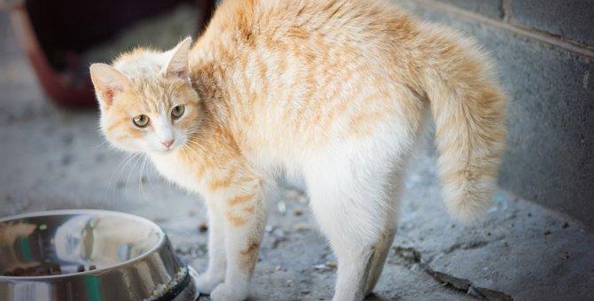 なぜ猫は毛を逆立てる?5つの気持ち