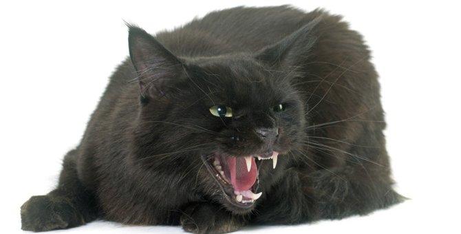 猫が嫌いな人に近づかれるとする鳴き声5選