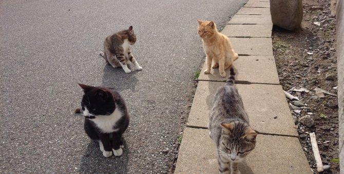世界6大猫スポット福岡県にある「相島」をリポート
