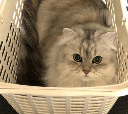 猫が『かご』に入りたがる理由3つ