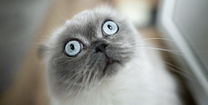 猫がびっくりしてしまう『飼い主の行動』5選!あなたは大げさなリアクションをしていませんか?