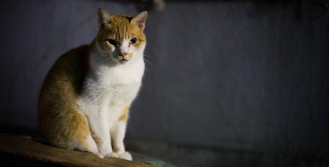化け猫の起源と4つの由来