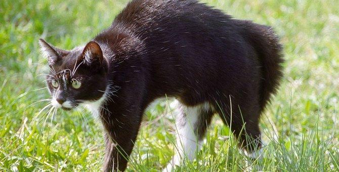 猫が緊張している時の仕草や行動10個