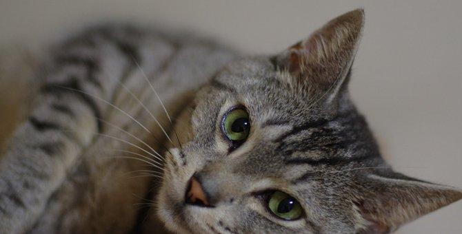 猫が『尊敬している人』だけにする仕草や行動4選
