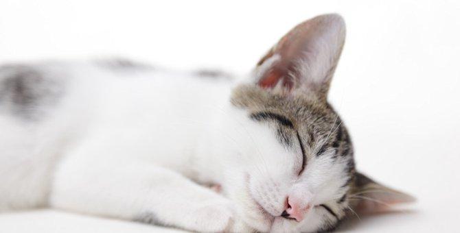猫が長生きする3つの秘訣をご紹介