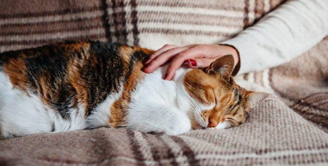 猫に『構われたくない!』と思わせてしまうNG行為4つ。悪気がなくても要注意!