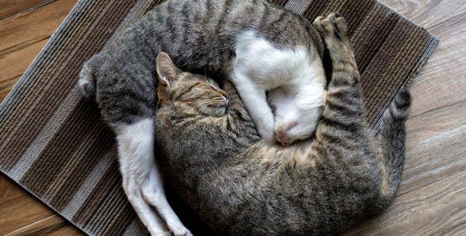 猫が『新しい敷物』を好む5つの理由