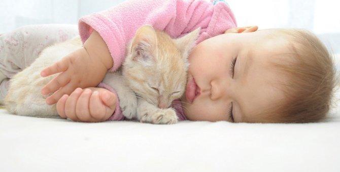 子供好きな猫の特徴とは?一緒に暮らすメリットまで