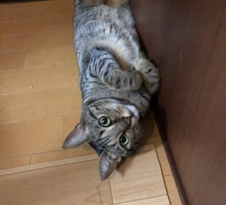 猫がおねだりしている時の仕草や行動5つ