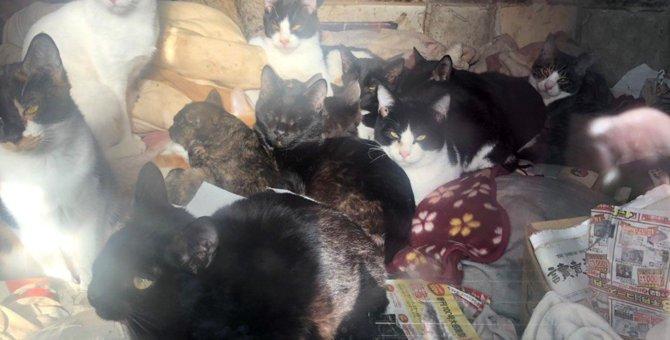 6畳2間に37匹…生活困難者の多頭飼育崩壊。絶望から救い出された猫