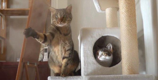 初めての加湿器!水蒸気が気になって必死に手を伸ばす猫ちゃん♪