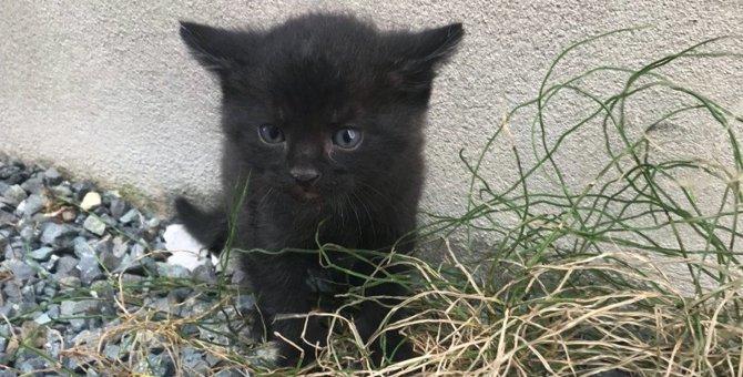 母猫を探して鳴き続ける一人ぼっちの子猫…家族の輪を繋いだ運命の出会い