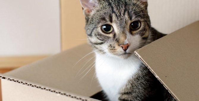 引っ越し後に猫が鳴くのはストレス?新居でできる対策と注意すること