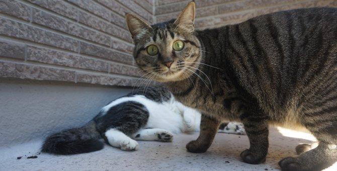 猫を保護したらやること 飼い方や飼えないときの対処法