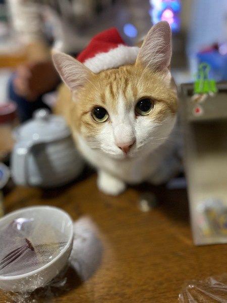 寒い時期に気をつけたい猫の泌尿器トラブルと予防策